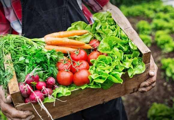 Biostimolanti in agricoltura e nel giardino-orto, cosa sono, cosa contengono, come funzionano e perché usarli. La Guida completa