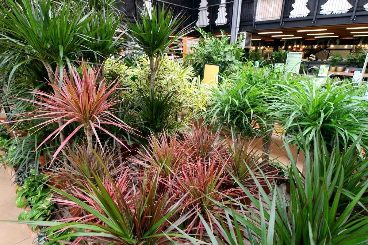 Vendita piante orto marostica