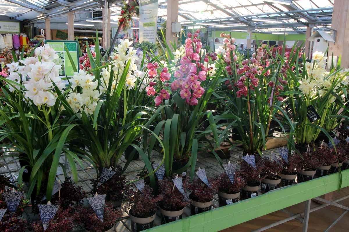 vendita piante bassano