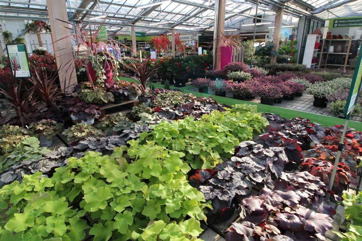 vendita piante con consegna cittadella