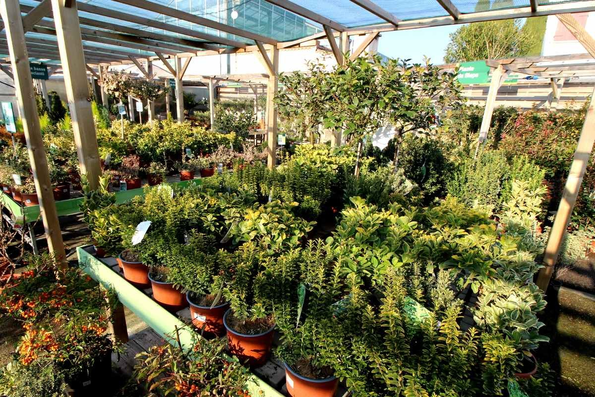 vendita piante giardino bassano