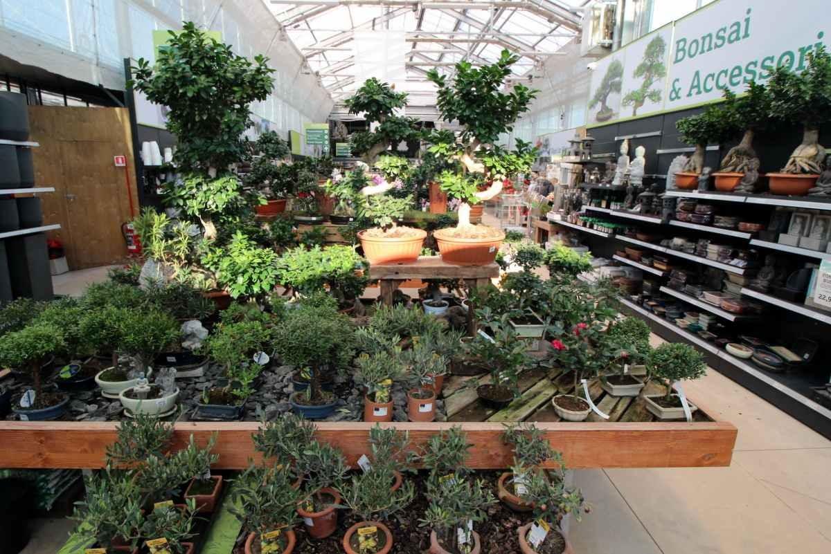 vendita piante online marostica cittadella bassano